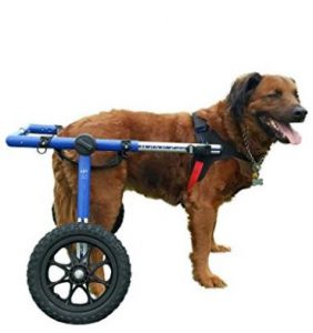 dogbwheelchair 282x300 - Help Canines
