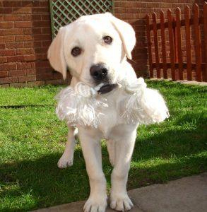dogtoys 1 293x300 - Best Dog Toys